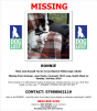 Black & White Jack Russell Terrier Cross Male Went missing on a walk between Gwinear & Angarrack